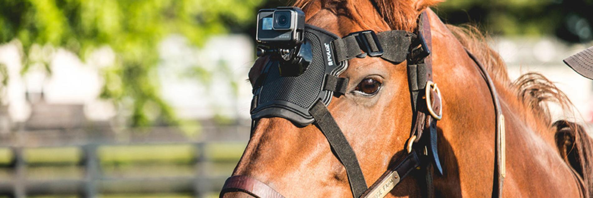Horses Filming Horses