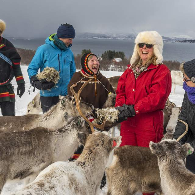 Sami people with reindeer in Sortland, Vesterålen, Northern Norway