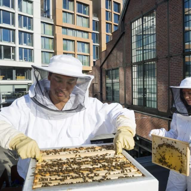 Two beekeepers at Vulkan in Oslo, Eastern Norway