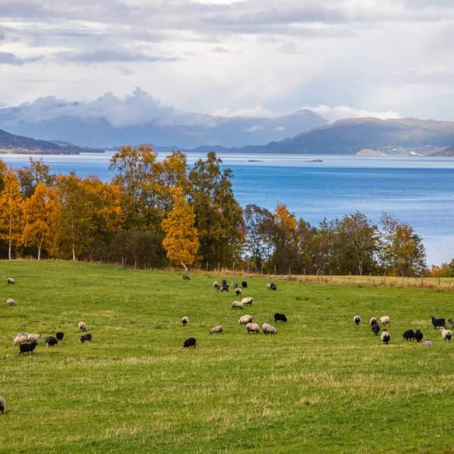Smaken av Nordmøre – Storlandet