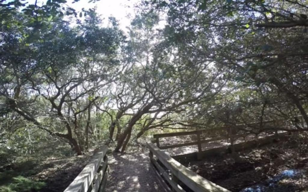 Go Local: Fort Fisher State Recreation Area Basin Trail
