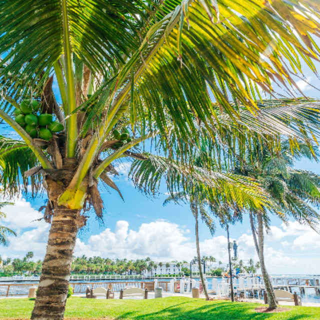 Palm trees and waterfront view of Hillsboro Inlet in Fort Lauderdale, FL