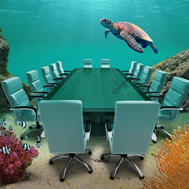 Conference Room with Turtle