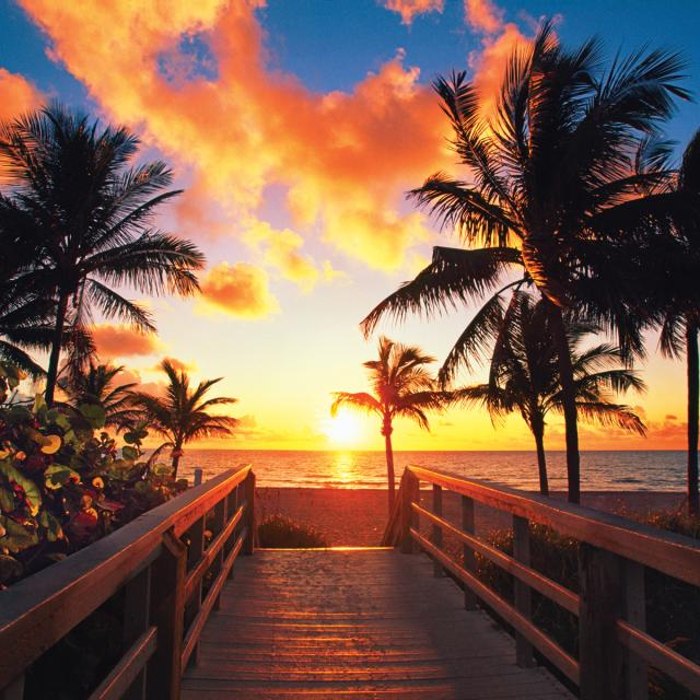 Pier with palm trees at sunset