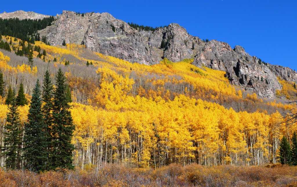 denver fall colors autumn foliage visit denver