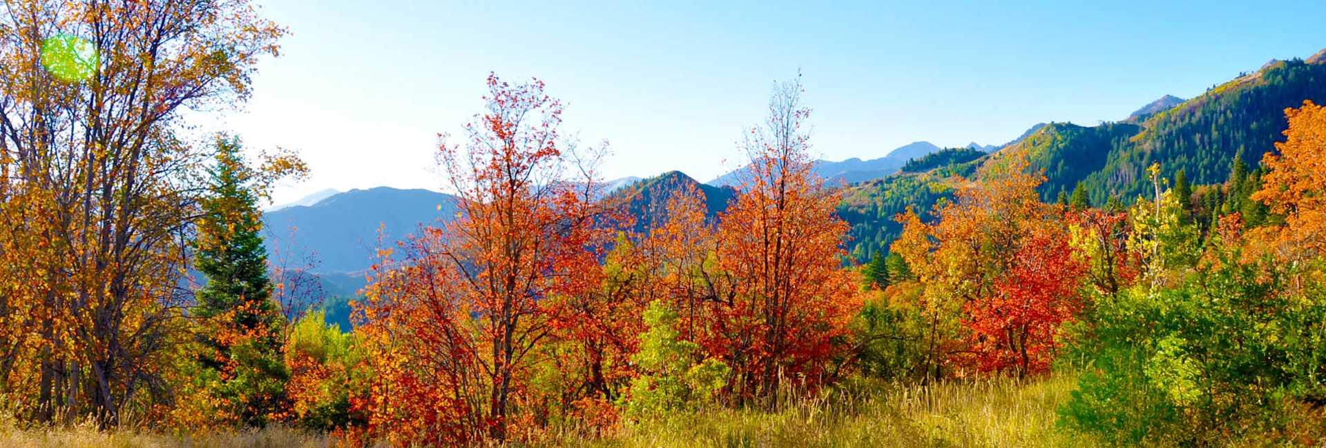 Utah Valley fall colors