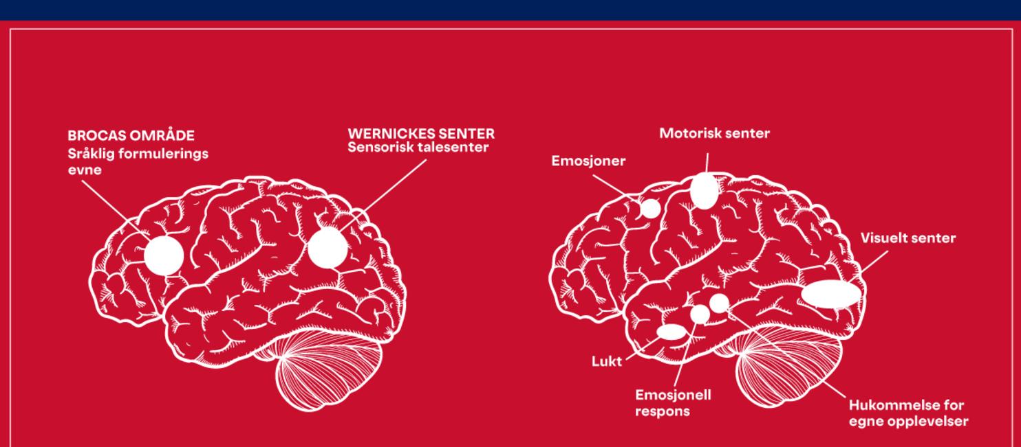 Hvordan hjernen aktiveres av historier vs. fakta