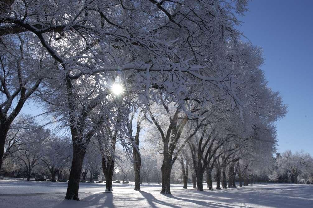 CSU Oval in Winter