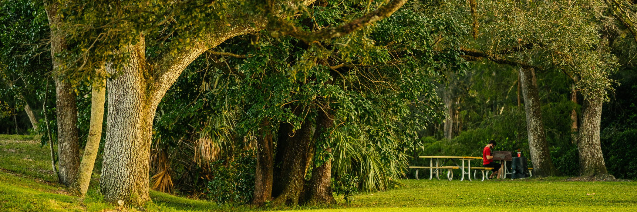 Man Sitting on Bench at Tree Tops Park in Fort Lauderdale