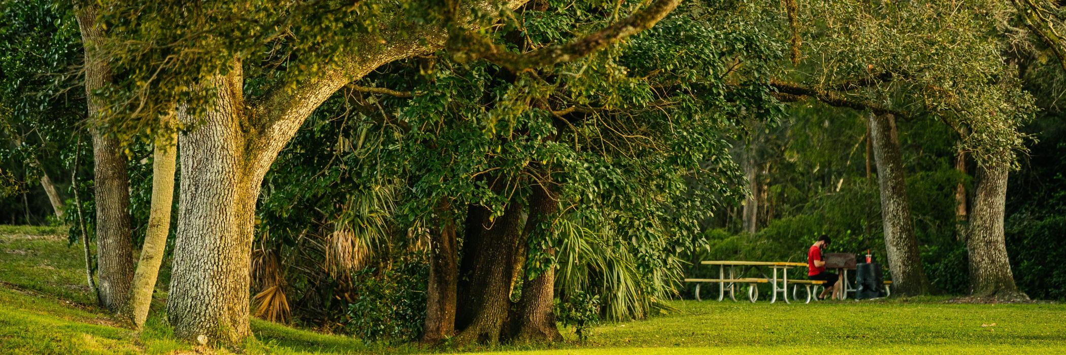 Tree Tops Park