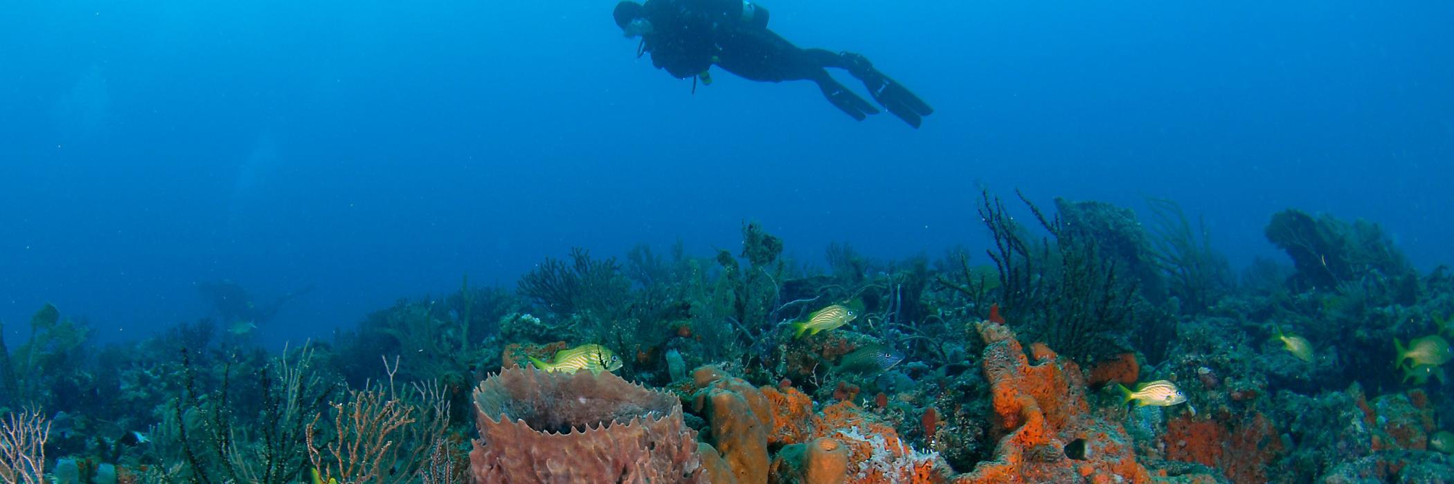 ReefDiver