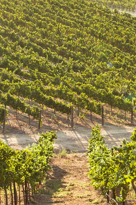 About Temecula Wines