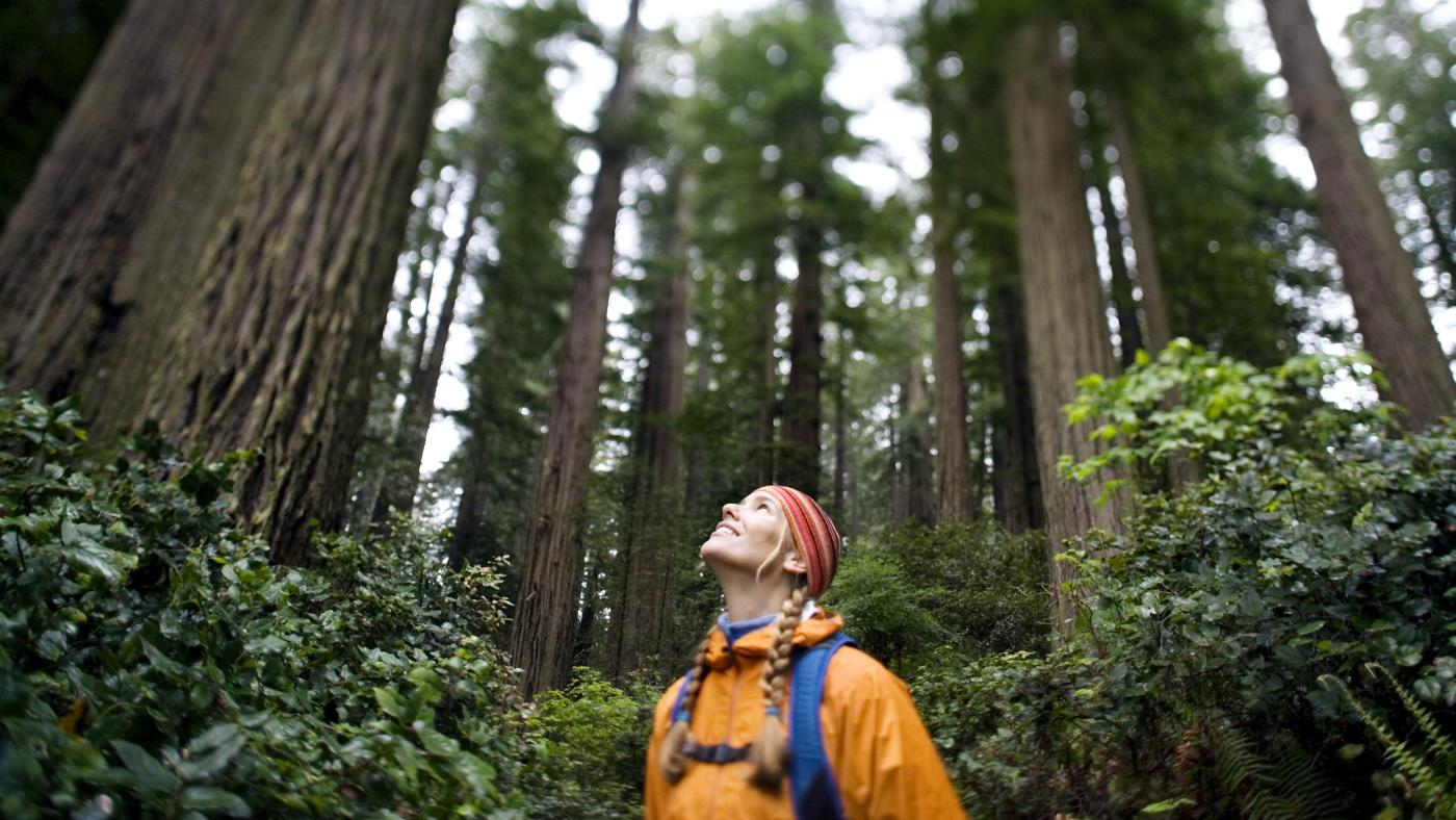 Best Redwood Hikes