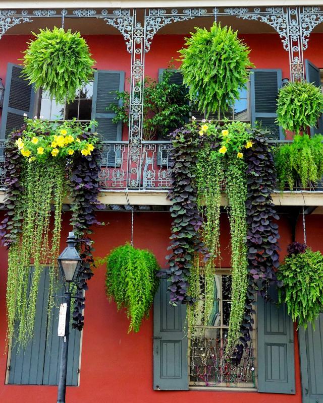 French Quarter Foliage