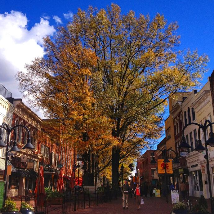 Best Vacation Spots In The Us For Retirees: Top 5 Places For Fall Foliage In Charlottesville