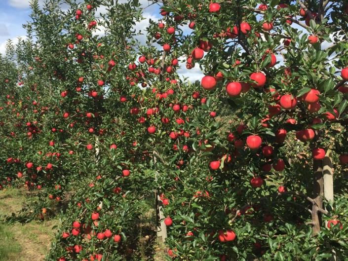 Grange Fruit Farm