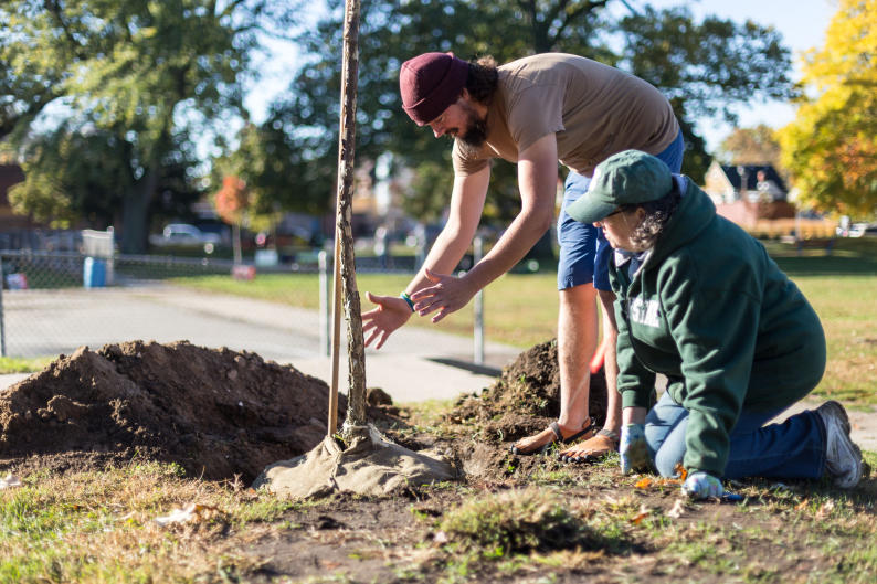 A tree planting at Congress Elementary School.