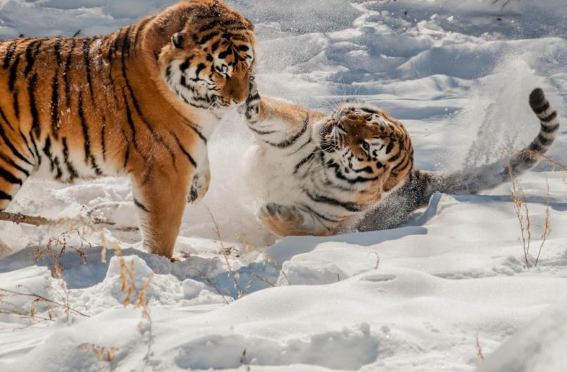 Even the animals at the John Ball Zoo have fun duringMichigan's snowy winter!