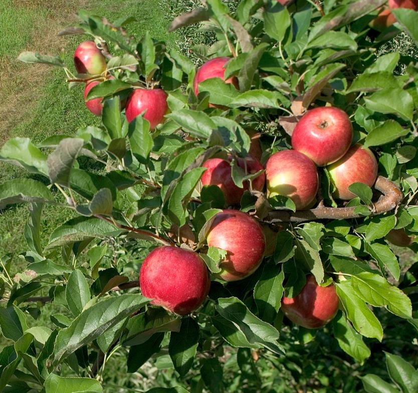 Grand Rapids alone is home to three different cideries, with even more in the greater area.