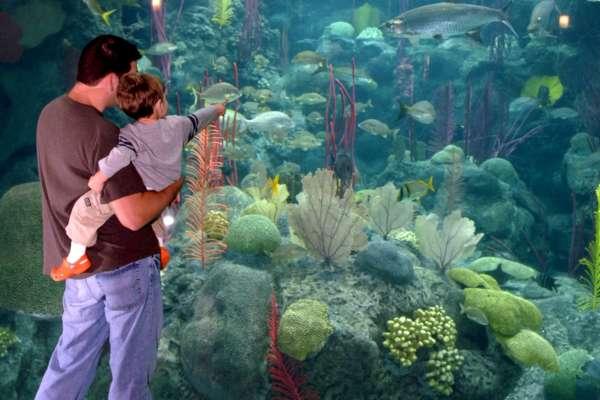 The Florida Aquarium Pointing