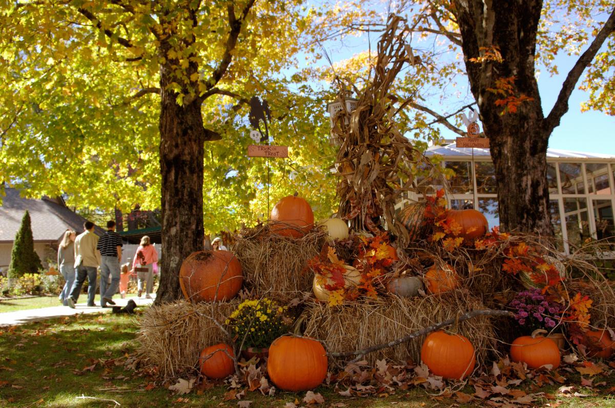 halloween fun in asheville