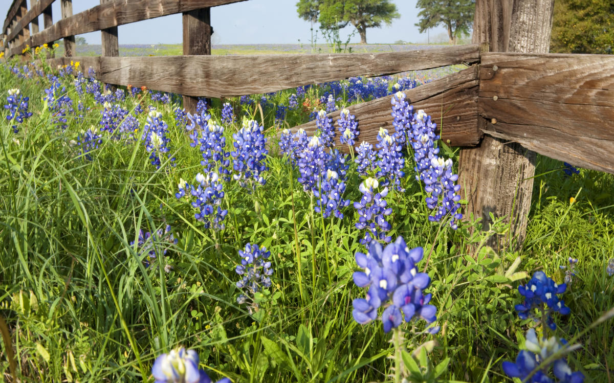 10 Gorgeous Places To See Bluebonnets This Spring In Austin Tx