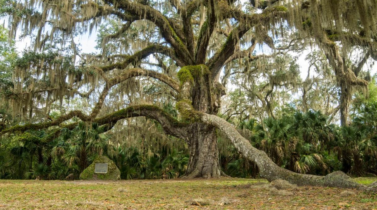 the haunted story of the fairchild oak