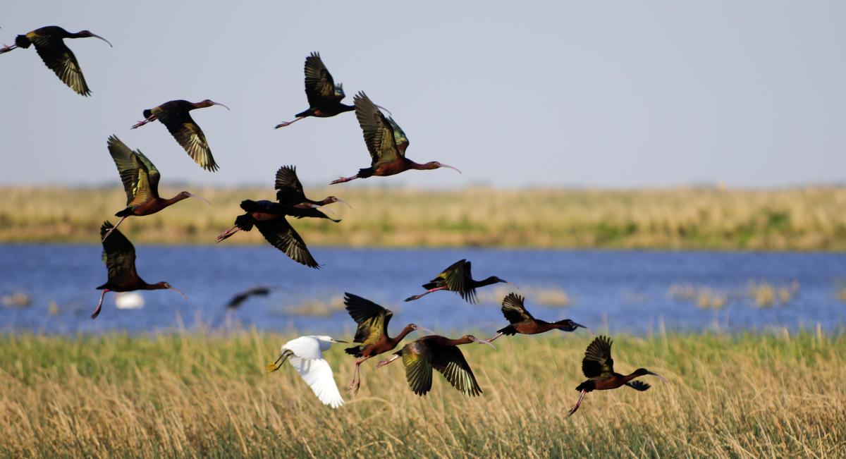 Kansas Bird Watching