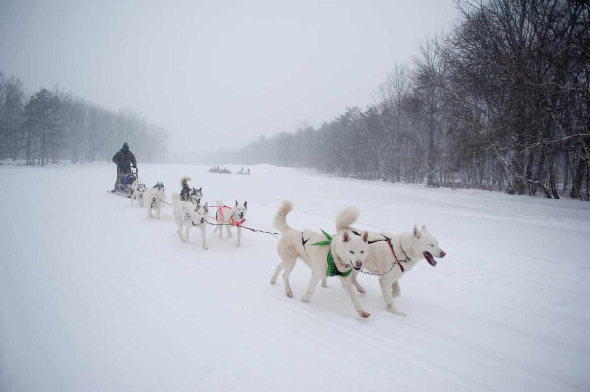 Co Op Advertising >> Pocono Mountains Dog Sledding   Winter Sport