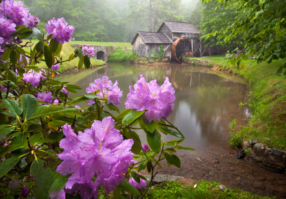 Enjoy These 5 Spring Blooms On The Blue Ridge Parkway