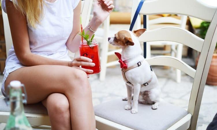 Dog Friendly patios in houston