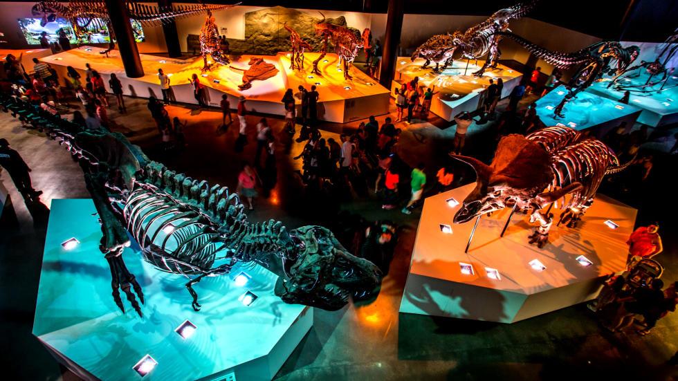 Museum of Natural Science Dinosaur Exhibit floor