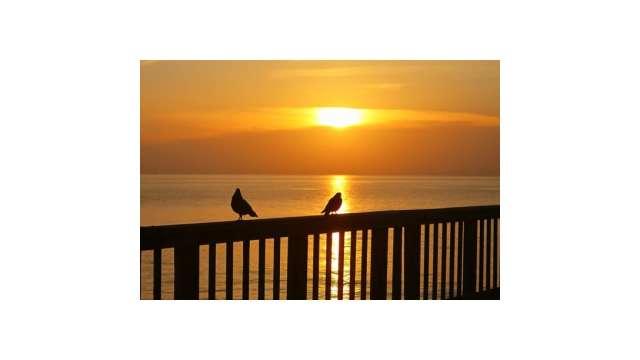 Setting Sun Spotlights Solitary >> Instagram Pix