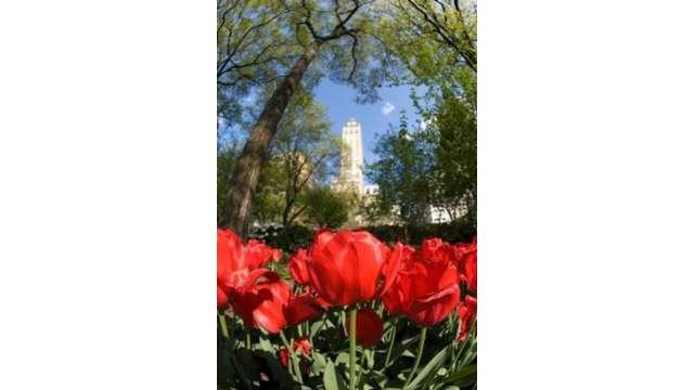 Central Park flowers