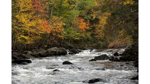 Fall foliage along Indian River