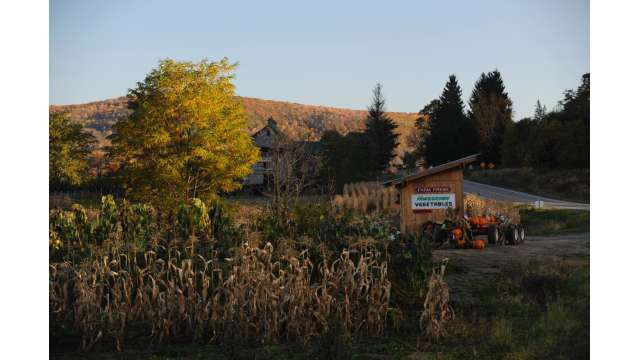 Farm Stand along Route 28
