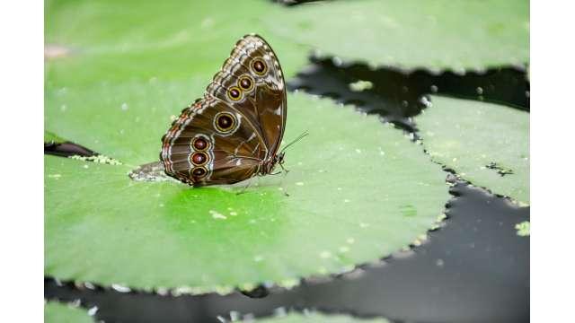 Joseph L. Popp, Jr Butterfly Conservatory 645