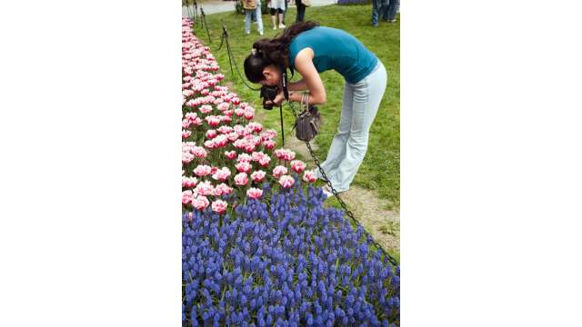 Tulip Fest - Albany 713