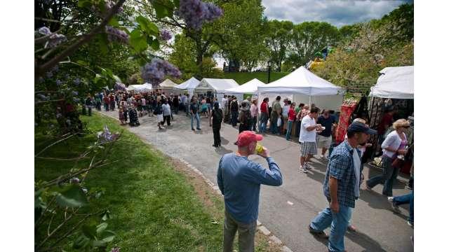 Tulip Fest - Albany 716