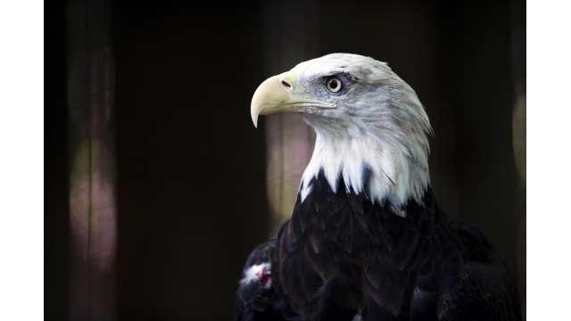 Berkshire Bird Paradise Sanctuary & Botanical Gardens 741
