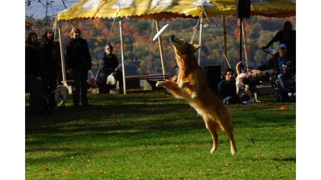 Every Dog Has His Day Event at Clemont State Historic Site. In honor of the many