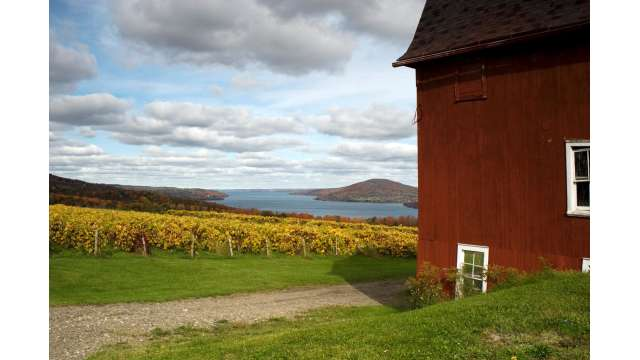 Vineyard along western shore of Canandaigua Lake 1042