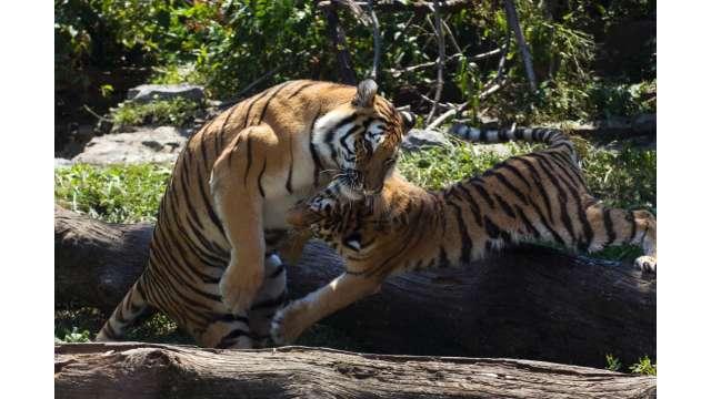 Buffalo Zoo 1101