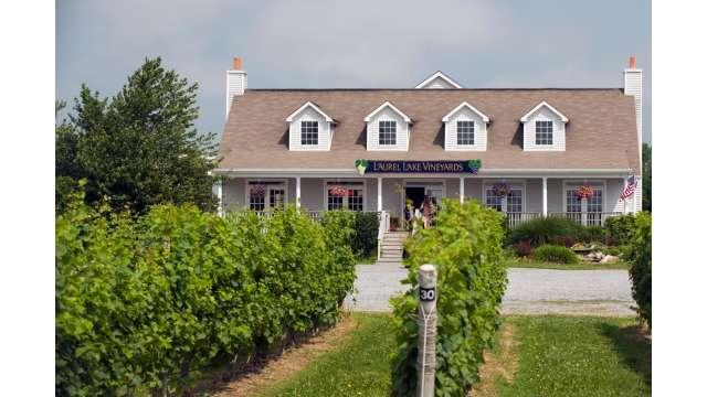 Laurel Lake Vineyard