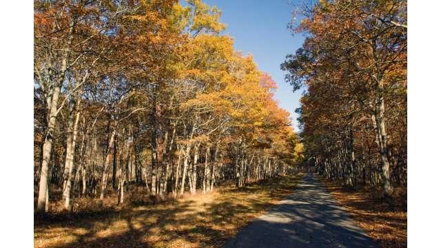 Connetquot River State Park Preserve 1434