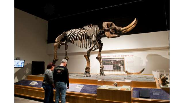 New York State Museum - Cohoes Mastodon 1487
